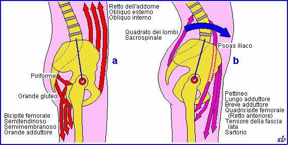 La ginnastica correttiva nella Spondilolistesi lombare