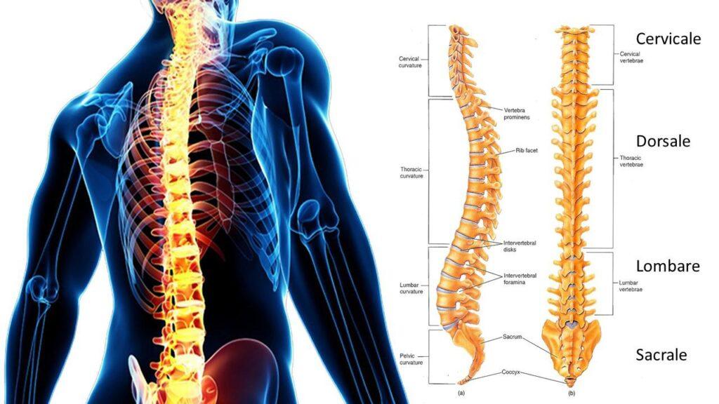 perché ci fa male la schiena